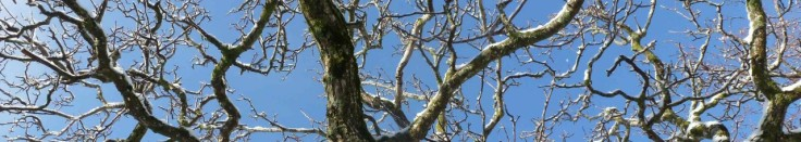 cropped-branches1.jpg
